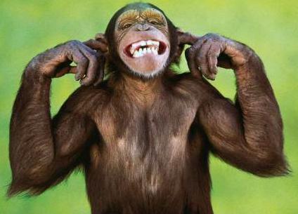 Funny_monkey 2