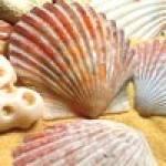 150_shells