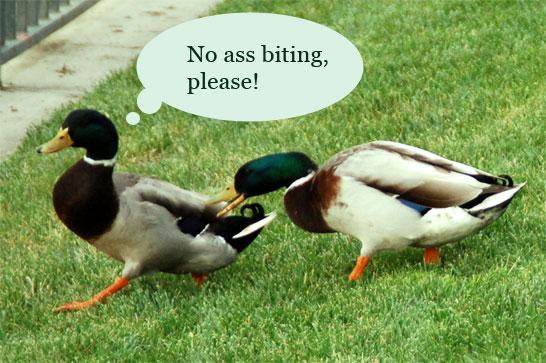 No Tuchas biting please!