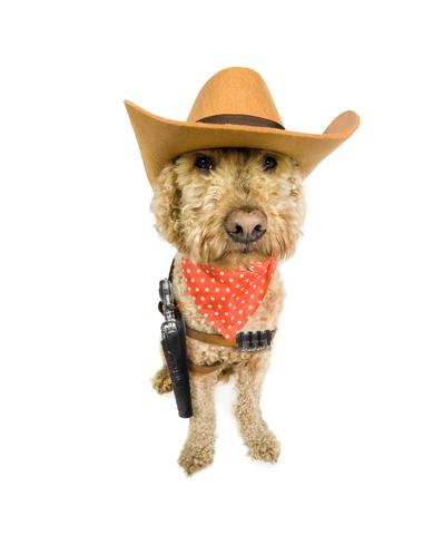 Sheriff watchdog