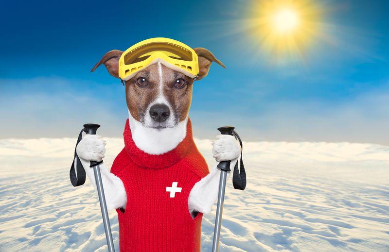 Skiing structured settlement watchdog