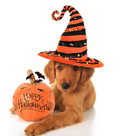 Happy Halloween from The Structured Settlement Watchdog