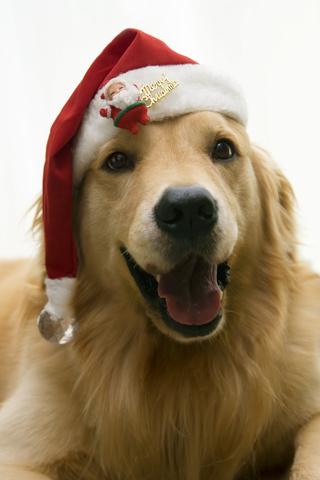 Holiday structured settlement watchdog