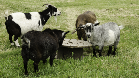 Structured Settlement Roundtable Baaaa