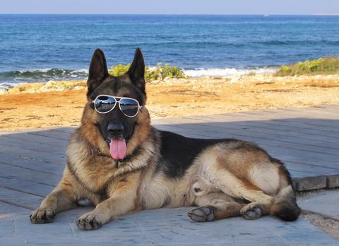 Structured settlement watchdog at the beach