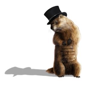 Groundhog sees shadow