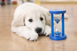 Puppy actuary
