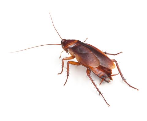Cockroaches ass