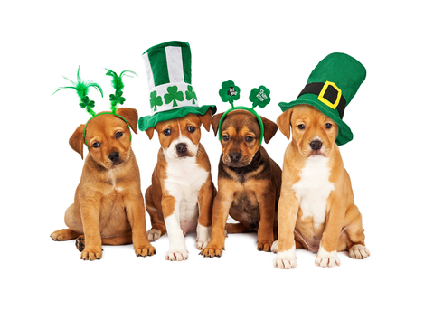 St Pats dogs