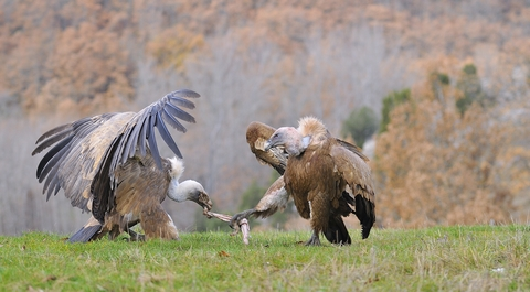Structured settlement cash now vultures