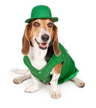 St Pats dog