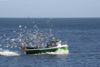 Seagulls boat